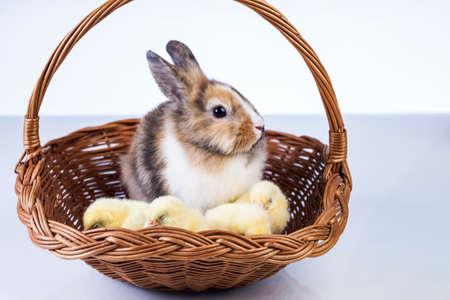 Ostern, Ei, Huhn, Kaninchen, Häschen Standard-Bild - 26103758
