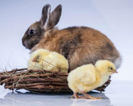 Ostern, Ei, Huhn, Kaninchen, Häschen Standard-Bild - 26103762