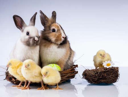 Ostern, Ei, Huhn, Kaninchen, Häschen Standard-Bild - 26100896
