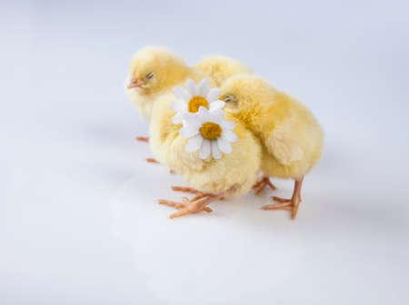 Ostern, Ei, Huhn, Kaninchen, Häschen Standard-Bild - 26100899