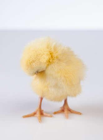 Ostern, Ei, Huhn, Kaninchen, Häschen Standard-Bild - 26100900