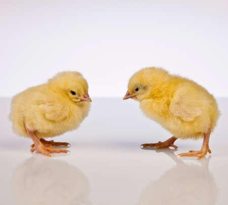Ostern, Ei, Huhn, Kaninchen, Häschen Standard-Bild - 26100907