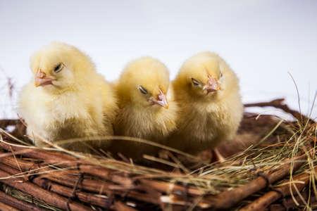 Ostern, Ei, Huhn, Kaninchen, Häschen Standard-Bild - 26100912