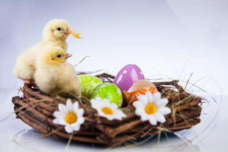 Ostern, Ei, Huhn, Kaninchen, Häschen Standard-Bild - 26100856