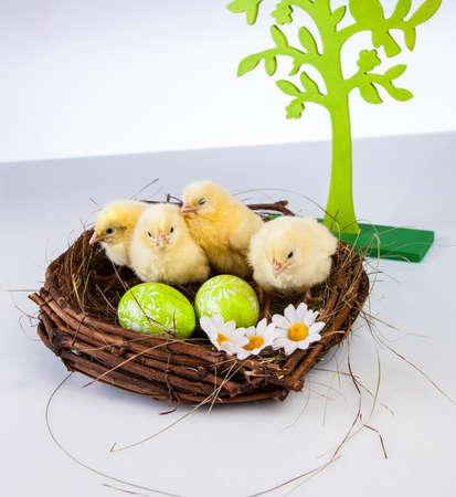 Ostern, Ei, Huhn, Kaninchen, Häschen Standard-Bild - 26100857