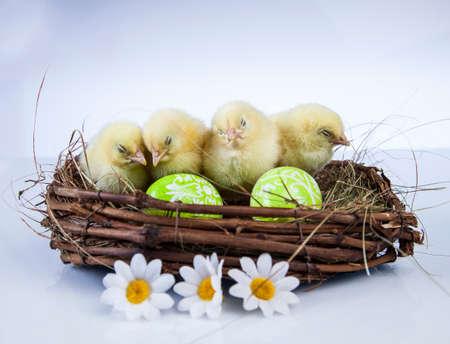 Ostern, Ei, Huhn, Kaninchen, Häschen Standard-Bild - 26100860