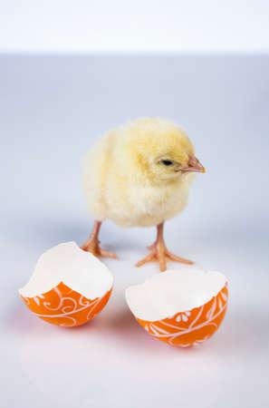 Ostern, Ei, Huhn, Kaninchen, Häschen Standard-Bild - 26100861