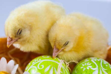 Ostern, Ei, Huhn, Kaninchen, Häschen Standard-Bild - 26100874