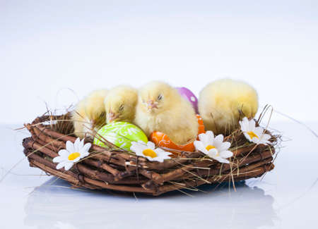 Easter, Egg, Chicken, Rabbit, Bunny photo