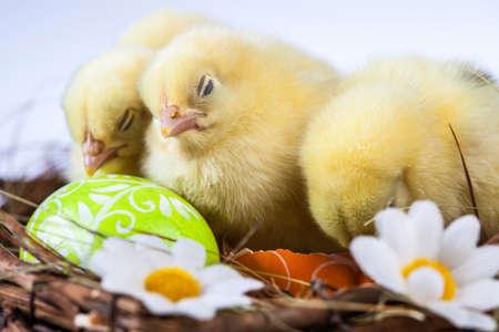 Ostern, Ei, Huhn, Kaninchen, Häschen Standard-Bild - 26100820