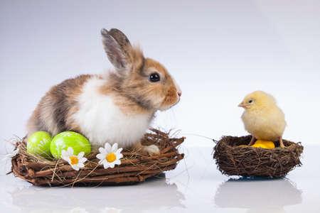 Ostern, Ei, Huhn, Kaninchen, Häschen Standard-Bild - 26100821