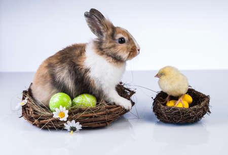 Ostern, Ei, Huhn, Kaninchen, Häschen Standard-Bild - 26100822