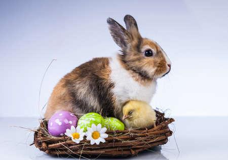 Ostern, Ei, Huhn, Kaninchen, Häschen Standard-Bild - 26100826