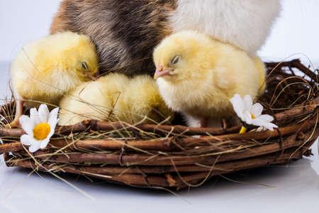 Ostern, Ei, Huhn, Kaninchen, Häschen Standard-Bild - 26100829