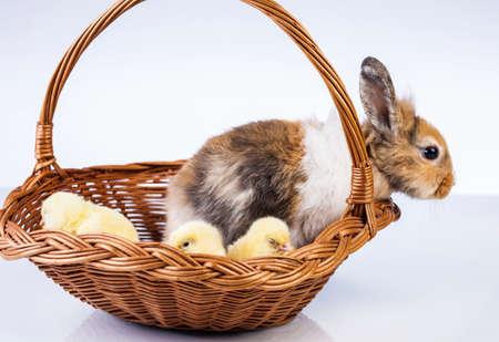 Ostern, Ei, Huhn, Kaninchen, Häschen Standard-Bild - 26100830