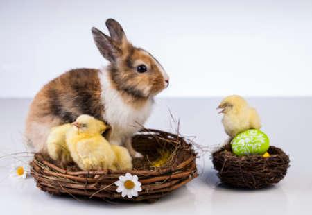 Ostern, Ei, Huhn, Kaninchen, Häschen Standard-Bild - 26100833