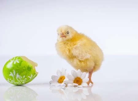 Ostern, Ei, Huhn, Kaninchen, Häschen Standard-Bild - 26100776