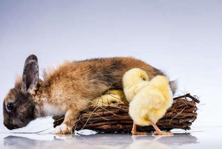 Ostern, Ei, Huhn, Kaninchen, Häschen Standard-Bild - 26100779