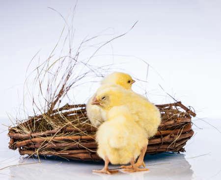 Ostern, Ei, Huhn, Kaninchen, Häschen Standard-Bild - 26100780