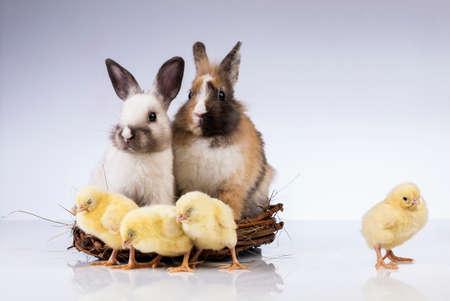 Ostern, Ei, Huhn, Kaninchen, Häschen Standard-Bild - 26100781