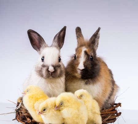 Ostern, Ei, Huhn, Kaninchen, Häschen Standard-Bild - 26100783