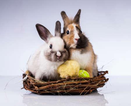 Ostern, Ei, Huhn, Kaninchen, Häschen Standard-Bild - 26100786