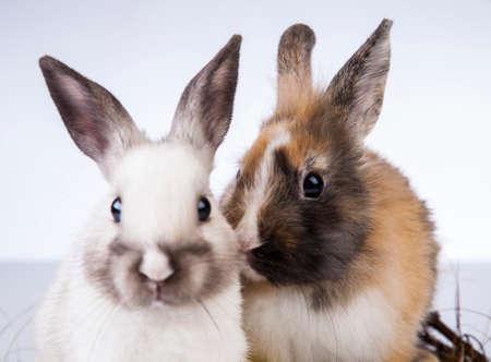 Ostern, Ei, Huhn, Kaninchen, Häschen Standard-Bild - 26100787