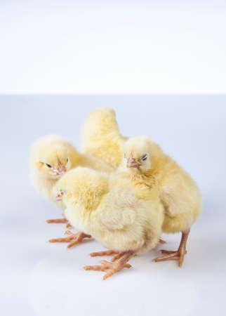 Ostern, Ei, Huhn, Kaninchen, Häschen Standard-Bild - 26100790