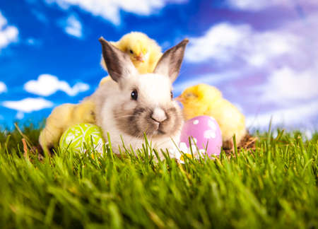 Easter chicken and rabbit on the grass