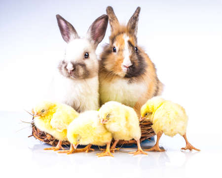 Easter chicken and rabbit on the white background