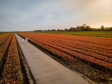 couple men and woman in flower field in the Netherlands during Spring, orange red tulips field near Noordoostpolder Flevoland Netherlands, men and woman in Spring evening sun, flowers
