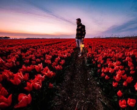 young men walking in flower field Tulip flower field in the Netherlands Noordoostpolder during sunset dusk Flevolands, colorful lines of tulips Imagens