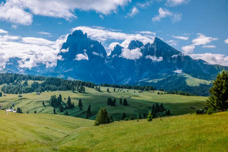 Alpe di Siusi - Seiser Alm with Sassolungo - Langkofel mountain group in background at sunset. Yellow spring flowers and wooden chalets in Dolomites, Trentino Alto Adige, South Tyrol, Italy, Europe.