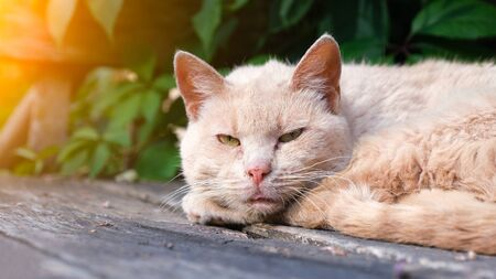portrait of a sad stray cat. the cat lies on a wooden bench against the leaves of a tree. the light of the sun in the frame