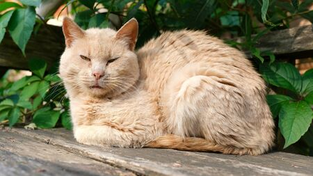 the cat lies on a wooden bench against the leaves of a tree Stok Fotoğraf - 130145622