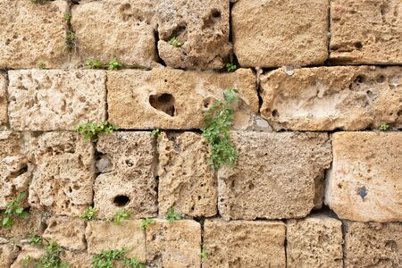 fragment of an old stone wall in the old city. wall in the old city. the plant grows against a stone wall Фото со стока