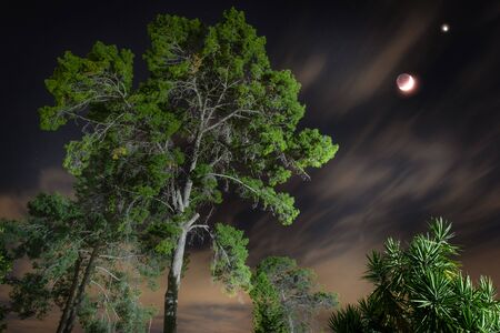 night landscape with trees and moon crescent. tall tree in the night and clouds with moon in the dark sky