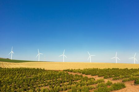 White wind power generators rotate in an agricultural field in Israel. yellow field and blue sky Archivio Fotografico - 146498755
