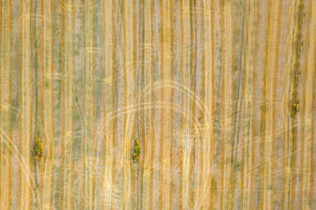 top view of a harvested wheat field. agricultural background Archivio Fotografico - 147560052