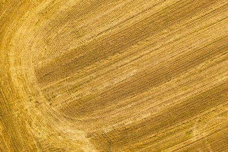 top view of a harvested wheat field. agricultural background Archivio Fotografico