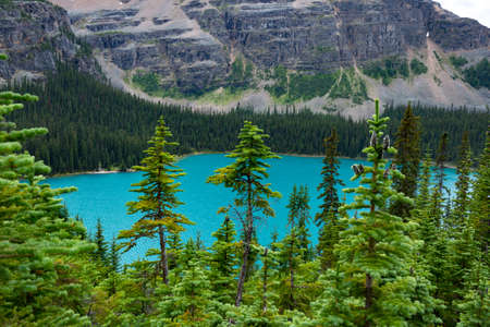 canadian rockies: Bright Blue Lake OHara, Yoho National Park, Canadian Rockies