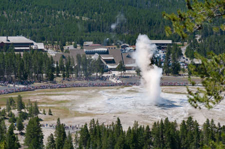 faithful: Old Faithful Geyser while erupting taken from the Overlook