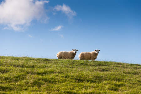 Two sheep on a dyke, Germany Stock Photo