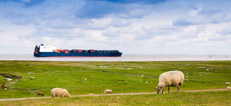 A container ship on the river Elbe is passing sheeps on a dike near Cuxhaven