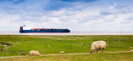 Een containerschip aan de Elbe passeert schapen op een dijk bij Cuxhaven