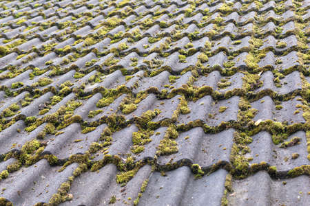 Tiles covered with moss