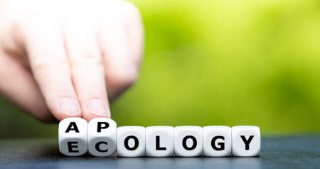 Apology to ecology. Dice form the words apology and ecology.
