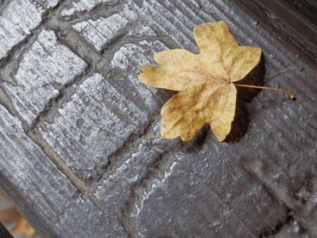 drop off: Autumn leaf. Stock Photo