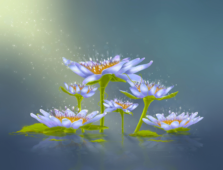 Drawing water lily with leaves and light photo
