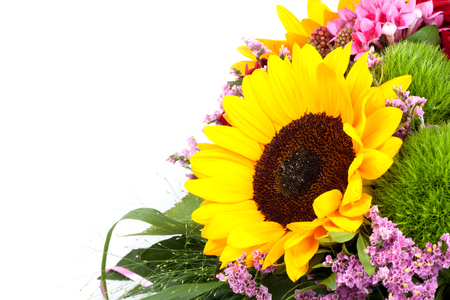 Beautiful colorful fresh sunflower, isolated on white background Stock Photo